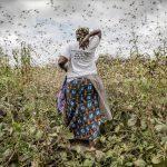 東アフリカで再びバッタが大量発生か【Pick-Up! アフリカ Vol. 50 (投稿:2020年12月1日)】