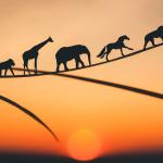 アフリカ各国のイノベーションランキング!【Pick-Up! アフリカ Vol. 45 (投稿:2020年11月25日)】