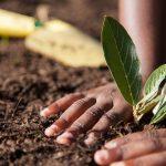 アフリカの農業セクターにおけるマイクロソフト社の取り組み【Pick-Up! アフリカ Vol. 55  :2020年12月5日配信】