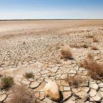 気候変動対策や生物多様性維持に向けた世界銀行の新投資計画とは?【Pick-Up! アフリカ Vol. 84:2021年1月19日配信】