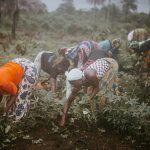 アフリカの農業の機械化がもたらす効果は?【Pick-Up! アフリカ Vol. 73:2021年1月5日配信】