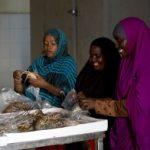 東アフリカで養殖業の開発に取り組むTRUE-FISHプロジェクトをご紹介!【Pick-Up! アフリカ Vol. 102:2021年2月9日配信】