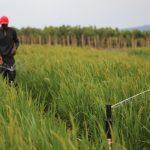米国ネブラスカ大学:サハラ以南アフリカで灌漑農業を促進へ【Pick-Up! アフリカ Vol. 141:2021年3月31日配信】
