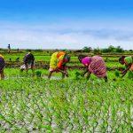 アフリカの農業とデューデリジェンス【Pick-Up! アフリカ Vol. 161:2021年5月11日配信】