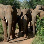 ナイジェリア:生物多様性の認知度は?【Pick-Up! アフリカ Vol. 168:2021年5月20日配信】