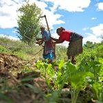 アフリカの若者の農業への関心はどれほどか?【Pick-Up! アフリカ Vol. 207:2021年8月17日配信】