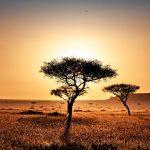 南アフリカで進められている気候変動への対策と債務救済は今後どうなっていくのか【Pick-Up! アフリカ Vol. 215:2021年9月14日配信】