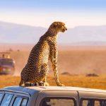 アフリカ大陸、ポストコロナ時代は高単価な観光が人気になる?【Pick-Up! アフリカ Vol. 217:2021年9月21日配信】